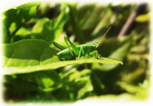 虫たちも春を喜ぶ