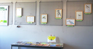 スズメ・メジロ・ヤマセミ・カワセミ・ハイタカ・ヒレンジャクの6種の鳥たちの絵