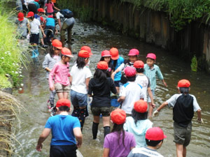 鹿化川での調査
